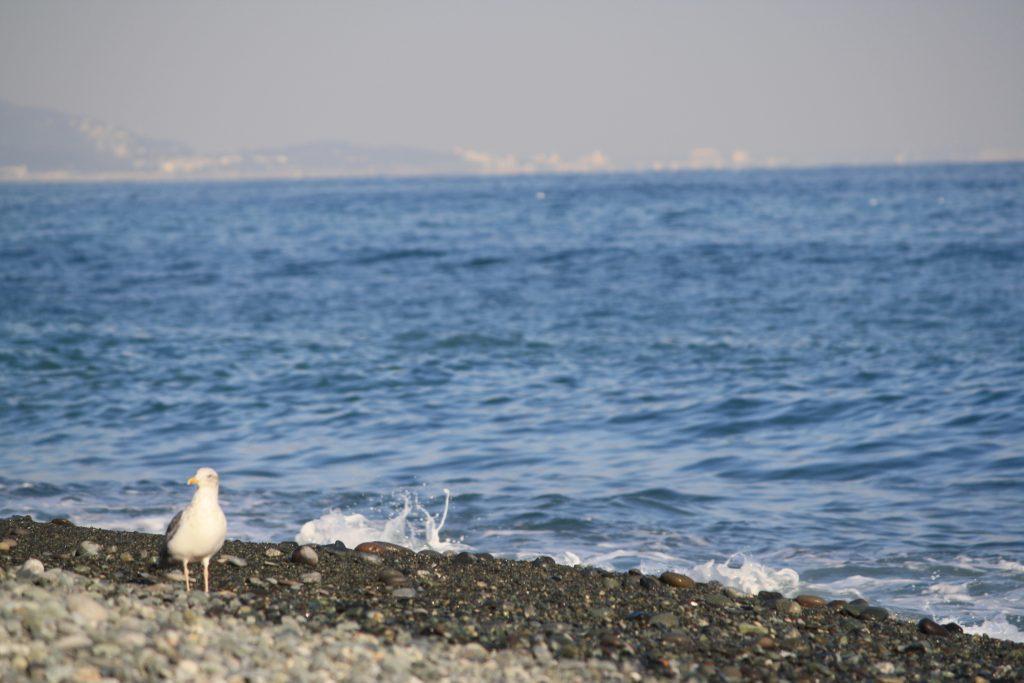 小田原 御幸の浜